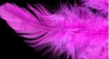Peříčka purpurové cca 220ks,10g